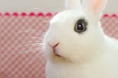 Luka (Cristina_Brelery) Tags: portrait bunny animal fauna retrato conejo rabitt 7dwf