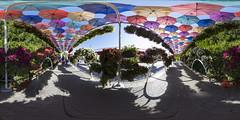 Dubai Miracle Garden @ 360 (jeglikerikkefisk) Tags: panorama dubai uae 360 sphericalpanorama vae equirectangular kugelpanorama sphrischespanorama dubaimiraclegarden