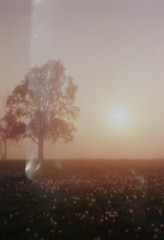 003 (derrickariley) Tags: light color 120 film abbey sunrise blurry kodak junior medium format 100 leak conception 620 ektar