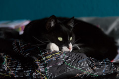 Dreaming of great places (Fardo.D) Tags: nyc cat bag subway map napping