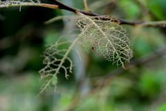 fragile. (Michela Miketosk Marcucci) Tags: wood mountains montagne leaf foglia altopiano asiago vicenza bosco roana miketosk miketoskcom michelamarcucci michelamiketoskmarcucci