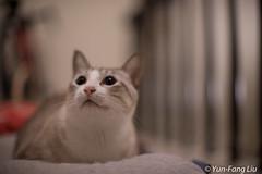 DSC_9389 (ear901) Tags: cat  beyondbokeh