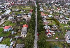 Ebatsuugade allee (BlizzardFoto) Tags: trees alley aerialphotography puud allee douglasfir viljandi aerofoto ebatsuuga uustn
