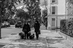 IMG_0257 (Nikan Likan) Tags: street white black dogs seine zeiss 35mm vintage lens photography prime mount carl m42 sur flektogon manual f28 neuilly | alu 2016