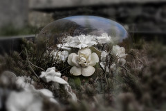 Forgotton Rememberance. (eveleighphotography) Tags: sky glass grave reflections death victorian funeral dome