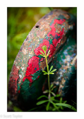 Green & Red #1 (Scrufftie) Tags: uk england color colour canon landscape decay chilterns buckinghamshire handheld derelict lightroom canonef24105mmf4lisusm photoshopcc canon5dsr