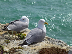 Someone's behind us (Cycling man) Tags: sea bird nature coast seagull gull seashore
