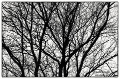 Structure (Strange_Enough) Tags: autumn trees winter abstract fall silhouette bare natureabstract nikond7000 wwwzaliphotocom
