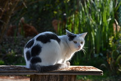 thea (ELENA TABASSO) Tags: cats animal animals cat natura gatto gatti animali animale