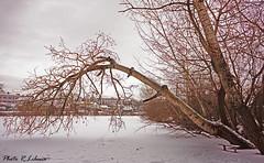 Ice Lake (LibanoGraphie) Tags: snowflake sky snow alberi three ukraine neve kiev marron marrone ukraina ucraina