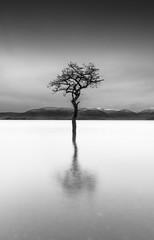 That tree - happy 2016 everyone! (Semi-detached) Tags: new seascape tree landscape happy scotland still nikon long exposure view angle year wide scottish calm east shore d750 meditation loch lomond manfrotto 1635 2016 meditations milarrochy