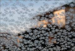I ricami del ghiaccio (Maulamb) Tags: freddo ghiaccio cristalli ricami