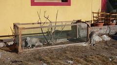 South Tyrol Cats (cultcha.org) Tags: italy italia dolomiti altoadige southtyrol niederdorf dolomiten villabassa