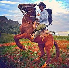 want to be a cowboy? #Aventure in #Viales #Cuba  TourGuide  Casa Renga y Julia #BedandBreakfast CasaVinales.jimdo.com Visit #Tabacco Farm #Cohiba #Horseriding #CubaTravel  (Casa Particular Vinales) Tags: cuba bedandbreakfast horseriding tabacco cohiba aventure viales cubatravel