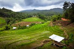 Chiang Rai (fix600) Tags: mountain landscape thailand nikon rice d610