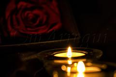 Noche de rosas (mArregui) Tags: luz noche nikon rosa vela rosas velas d5100 nikond5100