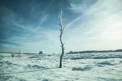 Dead Tree (marcos schmitz) Tags: snow landscape belgium belgique mort neige michel arbre mont fagnes wallonie rigi baraque