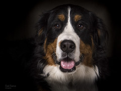 lolita (raulariak) Tags: portrait pets dogs lights shadows perro perros bernesdelamontaa