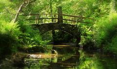 Eden. Explore (eddieELM) Tags: bridge ireland summer green forest canon river woods stream footbridge explore brook cavan kingscourt 600d fortyshadesofgreen dunnari eos600d rebelt3i kissx5 eddieelm