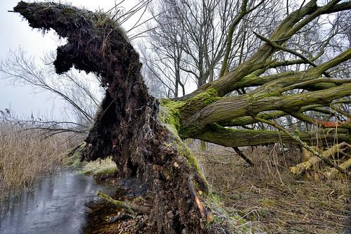 Tree42
