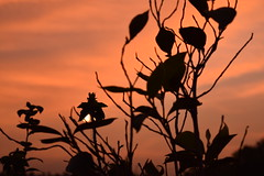 Falso Sol (- ojos glaucomicos -) Tags: sun sol crepusculo tarde