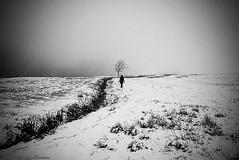 in solitude (alessandrafinocchiaro67) Tags: winter woman white mountain snow black cold monochrome field landscape open solitary nikond750