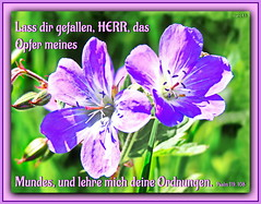 Opfer des Mundes / offerings of praise (Martin Volpert) Tags: flower fleur jesus flor pflanze bible blomma christianity blume geranium fiore blte bibel blomster virg christus lore biblia bloem blm iek floro kwiat flos geraniaceae ciuri bijbel storchschnabel kvet kukka cvijet flouer glauben christentum blth cvet zieds is floare  blome iedas bibelverskarte mavo43 ordnungen opferdesmundes psalms119108 offeringsofpraise