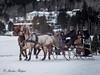 P1240618-Modifier (Marlène Rodgers) Tags: nature cheval hiver animaux derby saison activite stagathe