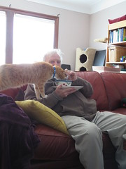 Dad eating with cats (andrea z) Tags: cat orangecat dad pete percy graycat