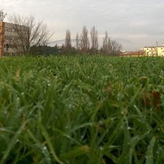 #shotonmylumia #shotonlumia #lumia735 #thelumians #nofilter #green #tree #trees #garden #ontheground #fromthebottom #nature #winter #sky #bluesky #town #city #cityscape #perspective #macro #nature_brilliance #vivonatura #macro_brilliance #scopriamobeneven (simoneaversano) Tags: city trees winter sky macro tree green nature garden town cityscape perspective bluesky ontheground nofilter fromthebottom instagram ifttt shotonmylumia shotonlumia lumia735 paesaggisannio thelumians vivonatura naturebrilliance macrobrilliance scopriamobenevento
