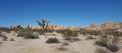 Mojave Desert scenery at Joshua Tree NP