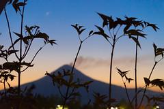 Hora azul 2 (Obedph) Tags: blue silhouette azul mxico contraluz volcano hour hora silueta puebla fumarola popo volcn popocatpetl