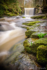 Nant Mill Wood. Feb 2016-18-5.jpg (revpdwilson) Tags: water wales landscape waterfall naturallight slowshutterspeed northwales nikon28300mmvr nikond750 lightroom6 nantmillwood
