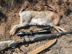 DSCN5675 (Doug's Graphics) Tags: composite gun scope rifle magnum jackrabbit remmington 7mm blacktailed bdl