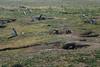Penguins, Isla Magdalena (silkylemur) Tags: ocean chile cruise sea patagonia seascape southamerica pinguinos canon lens landscape tierradelfuego penguins ship fullframe canoneos ona zoomlens endoftheworld beaglechannel chilena puntaarenas findelmundo islamagdalena landscapephotography magellanicpenguins llens 24105mm canonef canonef24105mmf4l canonef24105mmf4lisusm キャノン magdalenaisland eflens patagoniachilena selknam canonef24105mmf4lisusmlens efmount chileanpatagonia regióndemagallanesydelaantárticachilena canoneos6d fuegian regióndemagallanesydelaan