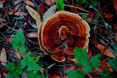 mushroom (Liza Chudnovsky) Tags: mushroom hiking ground soil halfmoonbay fertile