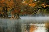 MORNING WALK. (NIKONIANO) Tags: river hojas surreal otoño invierno mágico sabino bruma waterscapes naturesfinest riverofdreams ahuehuete sabinos ahuehuetes nikoniano lugaresdeméxico natureselegantshots intantfav enméxico waterenvirons ahuehuetedemoctezuma sergioalfaroromero magiademéxico inviernoenellago