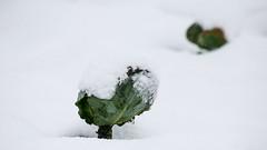 IMG_5156 ( EDDIE LAI) Tags: snow canon 5d  yilan
