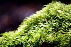 Moss (tlchernaske) Tags: vancouver moss bc trail