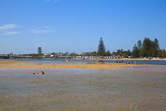 LR-160316-061.jpg (Finert) Tags: theentrance friendlyflickr pelicanfeeding 160316