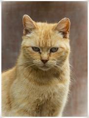 LINDO GATITO (BLAMANTI) Tags: cat gatos