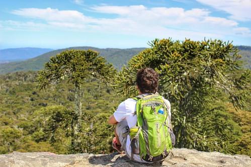 Araucarias en la Piedra del Águila 🌿     #nahuelbuta #landscape #instacool #biobio #chile #chilegram #chilenatural #parquesnacionales #chilefollow #instadaily #picoftheday #trekking #ecoturismo #unab #conce #sun #paisajedfeño #enjoy