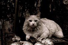 (business practice) (Dinasty_Oomae) Tags: blackandwhite monochrome cat blackwhite chiba  exakta ichikawa      ihagee  exaktavarex    vx