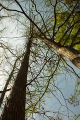 neural network (Darren German) Tags: sky tree austin long tx cypress
