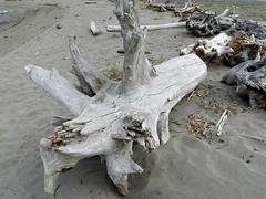 Drift Wood (Ramona H) Tags: wood beach driftwood whidbeyisland drift alaspit