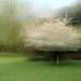appleton tree