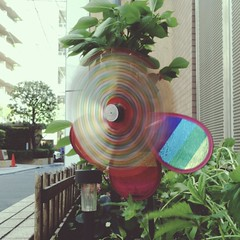 Plastic flower windmill (central-hi) Tags: flower colorful wind blow iphone lightboxr dxoone