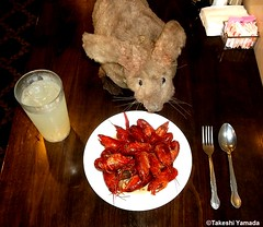 Dr. Takeshi Yamada and Seara (Coney Island Sea Rabbit) at the Seaport Buffet Chinese restaurant in Sheepshead Bay in Brooklyn, NY on May 13, 2015.  20150513 131 128=2040C= (searabbits23) Tags: ny newyork sexy celebrity rabbit art hat fashion animal brooklyn sushi asian coneyisland japanese star restaurant tv google king artist dragon god manhattan famous gothic goth uma ufo pop taxidermy vogue cnn tuxedo bikini tophat unitednations playboy entertainer oddities genius mermaid amc mardigras salvadordali performer unicorn billclinton seamonster billgates aol vangogh curiosities sideshow jeffkoons globalwarming mart magician takashimurakami pablopicasso steampunk damienhirst cryptozoology freakshow seara immortalized takeshiyamada roguetaxidermy searabbit barrackobama ladygaga climategate  manwithrabbit