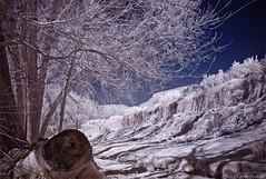 IR01 (Carlos Poveda Fotografia) Tags: leica tree nature ir infrared infrarrojos leicam8 voigtlandercolorskopar21mmf4 hoyair72filter