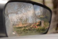 Car Mirror 1 (Sarah Hina) Tags: cemetery reflections rearviewmirror lookingback carmirror
